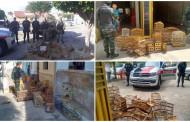Polícia Ambiental realiza maior apreensão de aves no Vale do Piancó