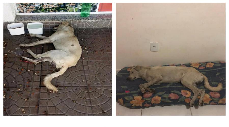 Mais um cão em situação de penúria é resgatado pelo Adota Patos