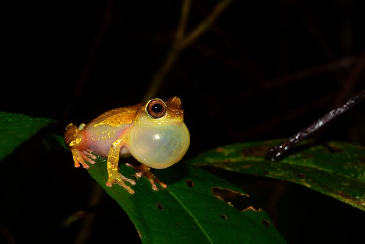 Expedições à Amazônia identificam 12 novas espécies de animais