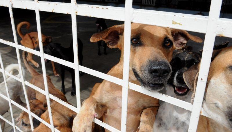 Adota Patos organiza Dia das Estrelas para cães do Canil Municipal com o objetivo de conseguir adoções