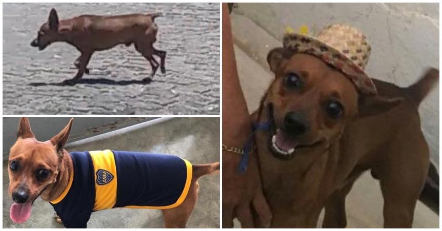 Cachorro está perdido em Patos e dona oferece recompensa para quem encontrá-lo